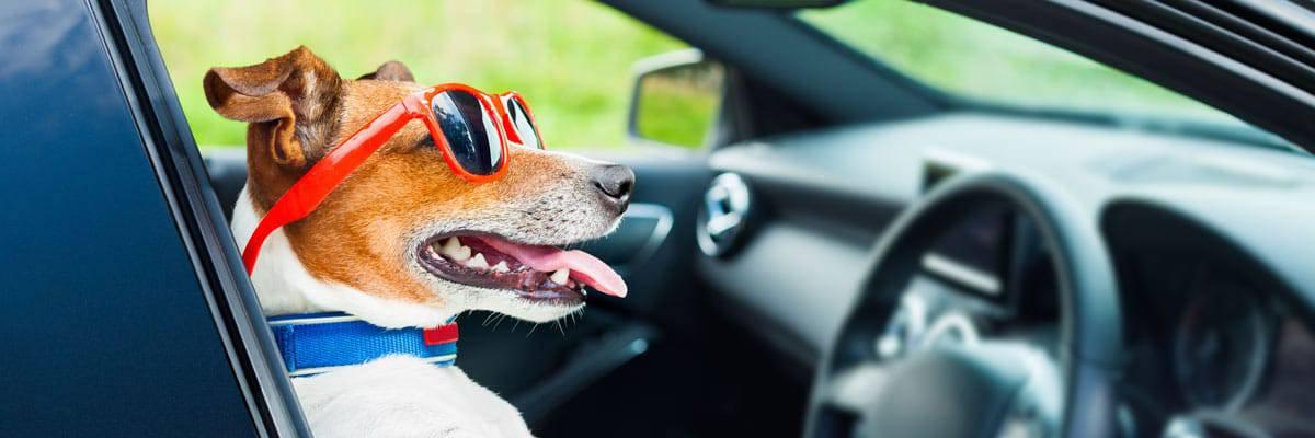 Autobench voor je hond kopen ? De beste Autobenches