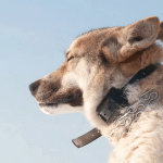 De beste anti blafband voor je hond