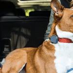 De beste gps tracker voor je hond
