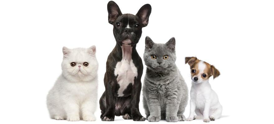 Beste Dyson stofzuiger voor hondenharen