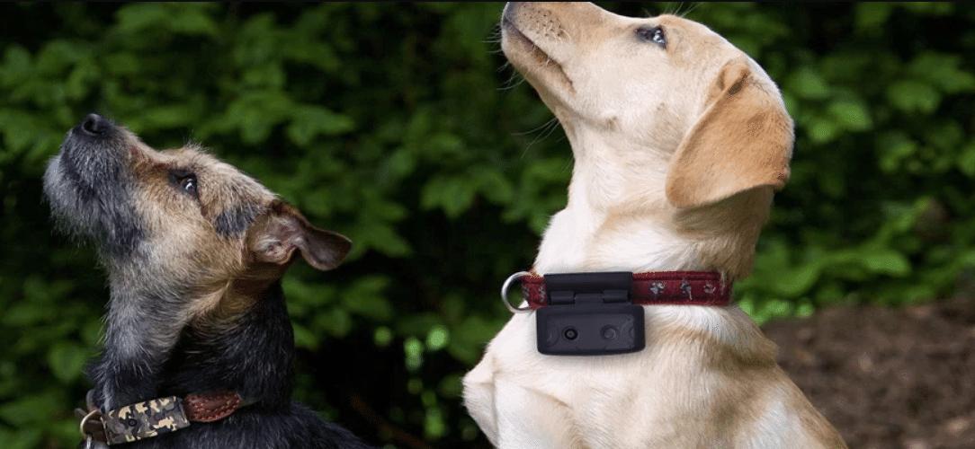 gps-tracker-hond