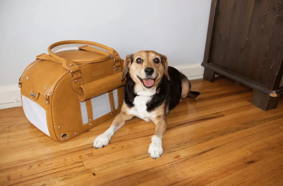 hondendraagtas