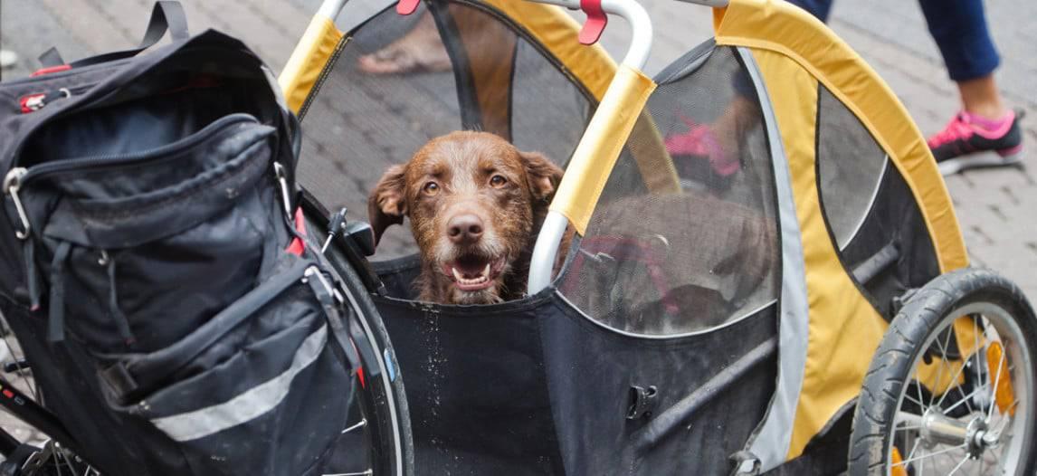 De beste hondenfietskar