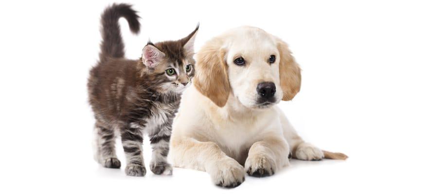 hondenhaar-stofzuiger