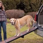 Beste loopplank voor je hond