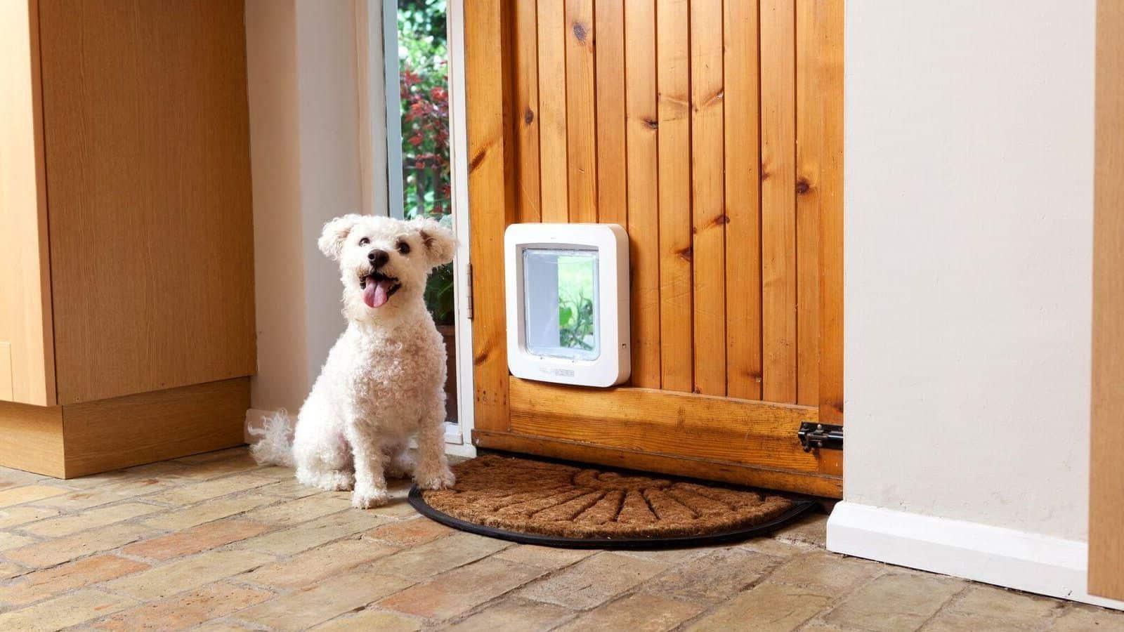 Beste hondenluiken in 2019: Beoordelingen & handleiding voor kopers