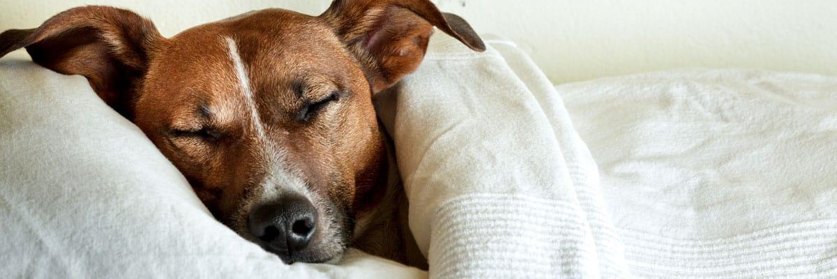 De beste hondenmanden voor kleine honden