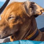 Hondenslaapzak kopen ? De beste hondenslaapzak