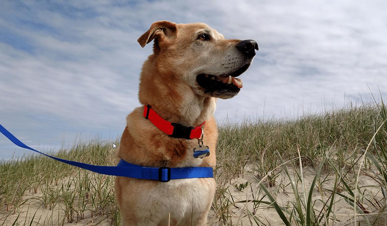 Het beste hondentuig