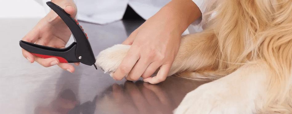 nagelschaar-hond
