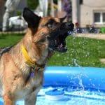 Hondenzwembad kopen? De beste hondenzwembaden