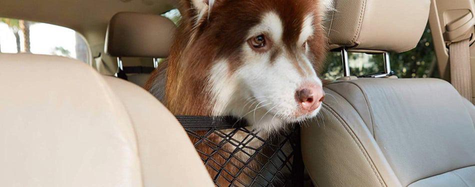 De beste Hondenrekken voor in de auto