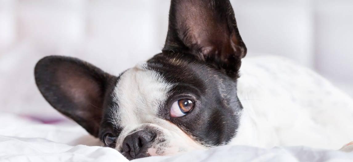 Het beste Orthopedische hondenbed