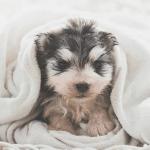 De beste puppy shampoo