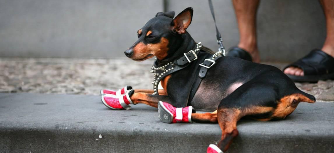 De beste hondenschoenen