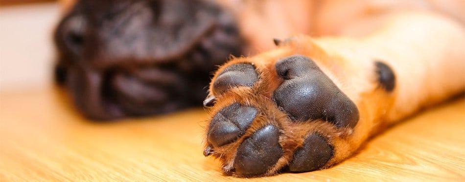 beste hondenschoenen