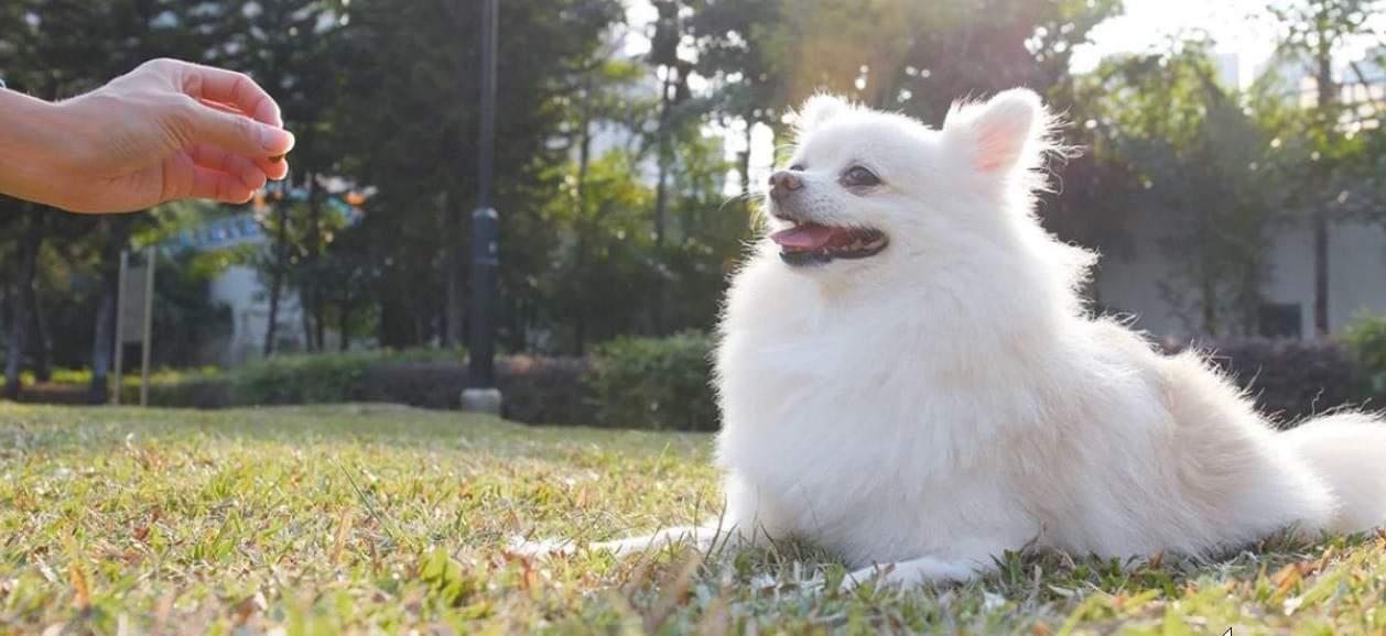 De beste hondensnacks