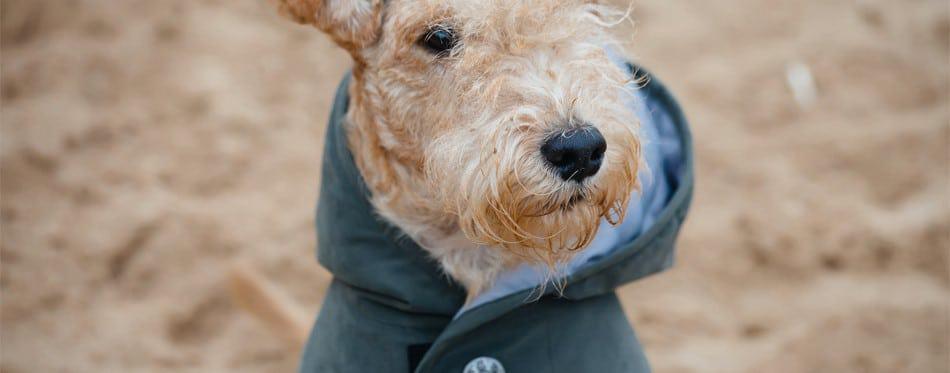 beste-regenjas-hond