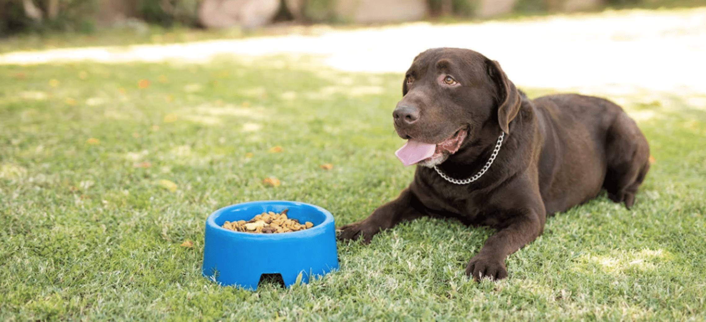 Beste Senior hondenvoer