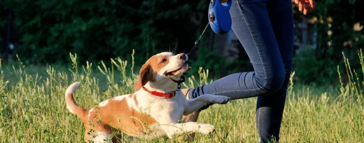 hond-aan-riem