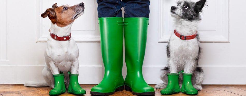 hondenschoenen