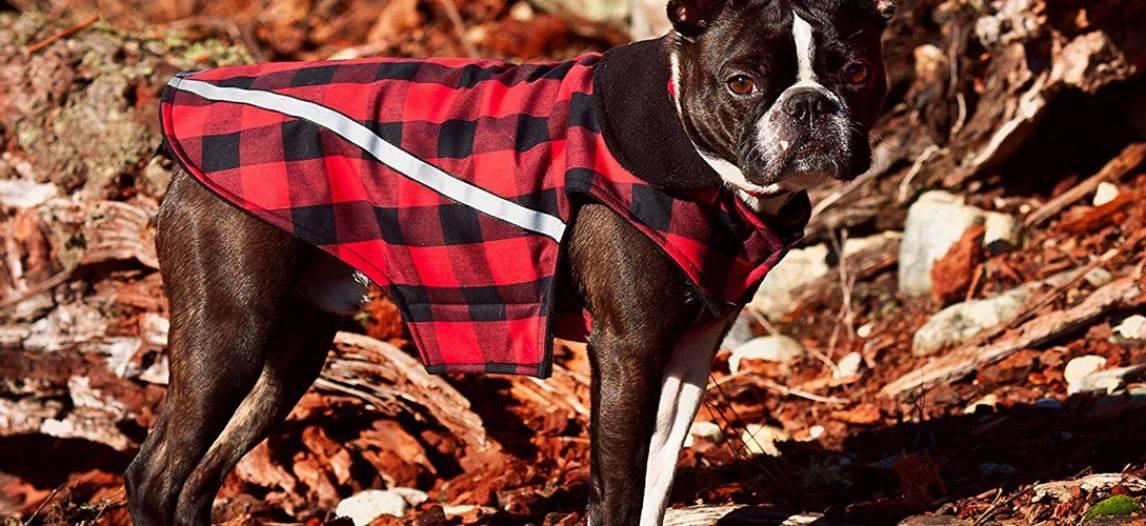 De beste regenjas voor je hond