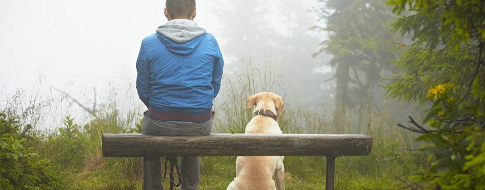 regenjassen honden
