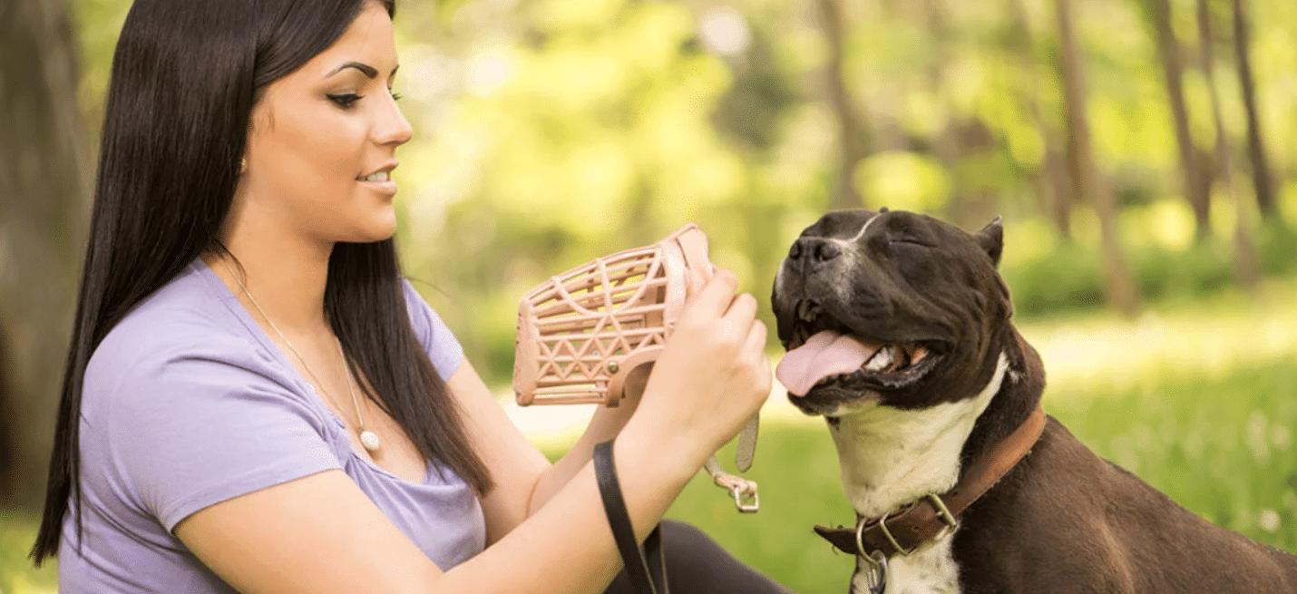 Beste muilkorven voor honden