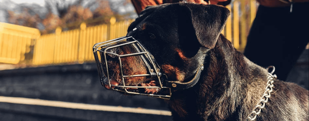 hond met muilkorf