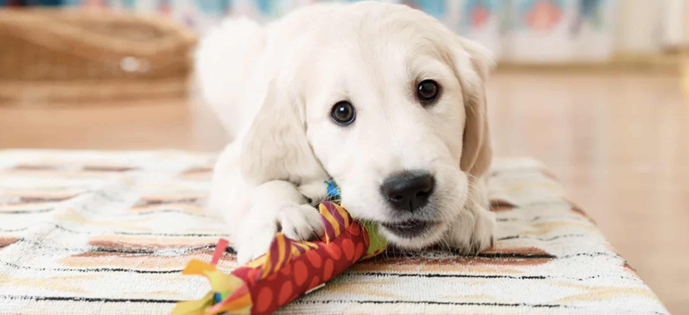 De leukste spelletjes voor je hond