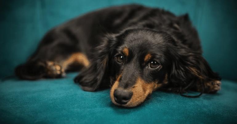 Beste kalmeringsmiddel voor honden