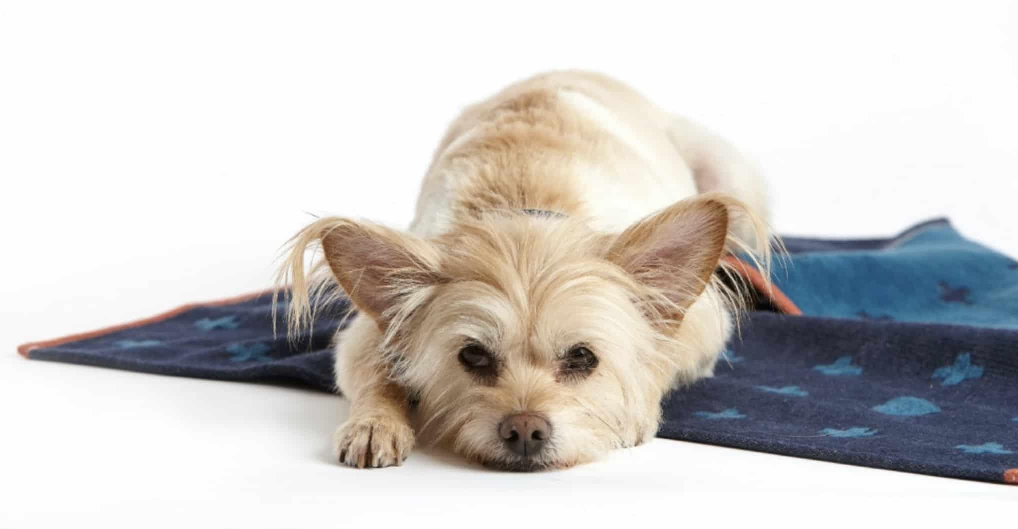 Beste vetbed voor je hond