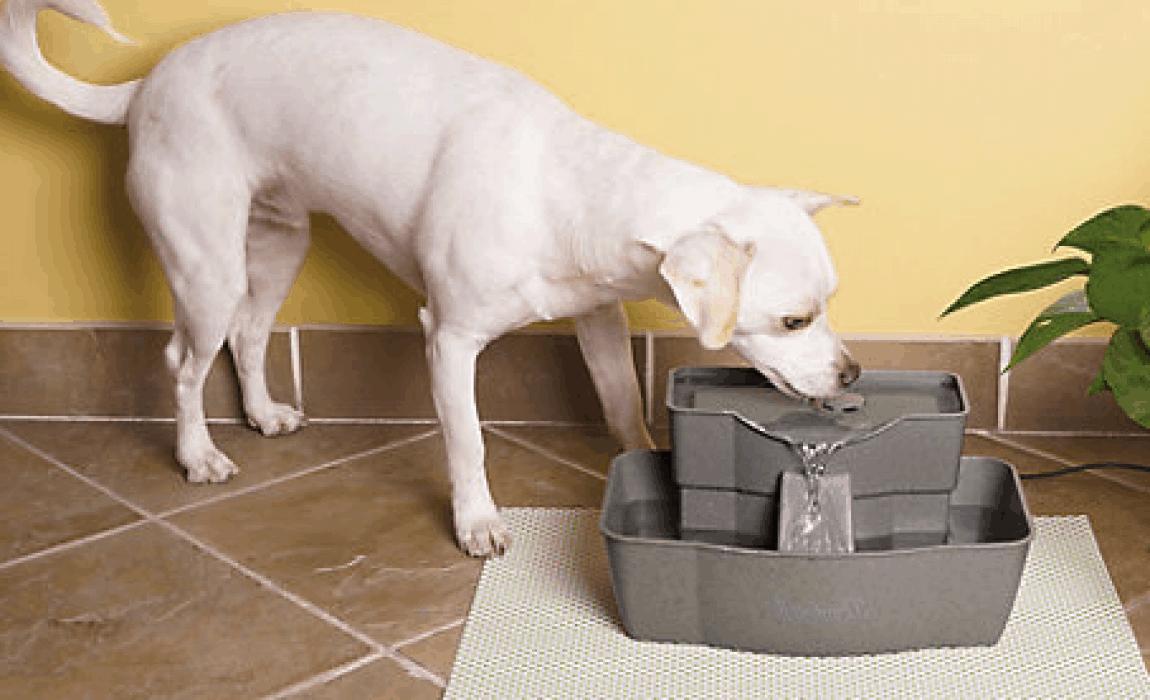 Beste Drinkfontein hond