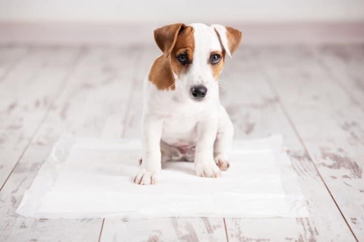 Beste Puppy training pads