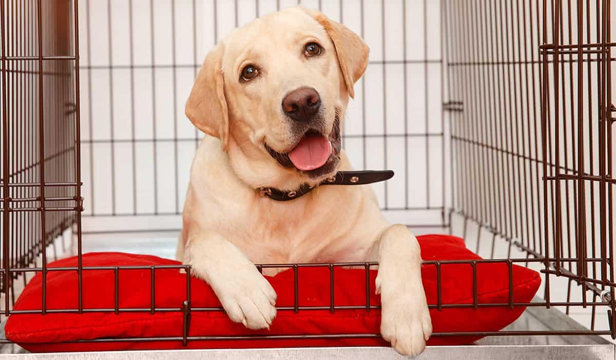 Beste puppy ren