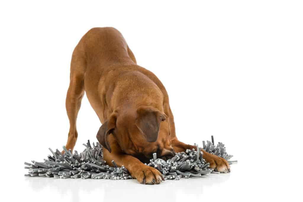 Beste snuffelmat voor honden