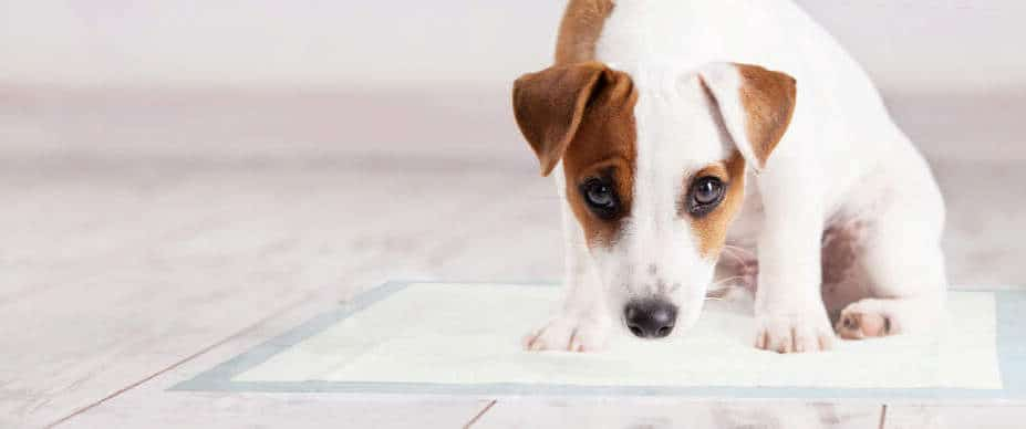 Beste Puppy training pads