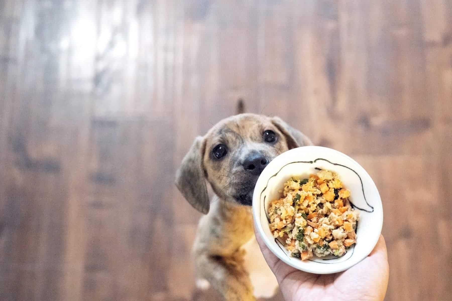 biologisch hondenvoer