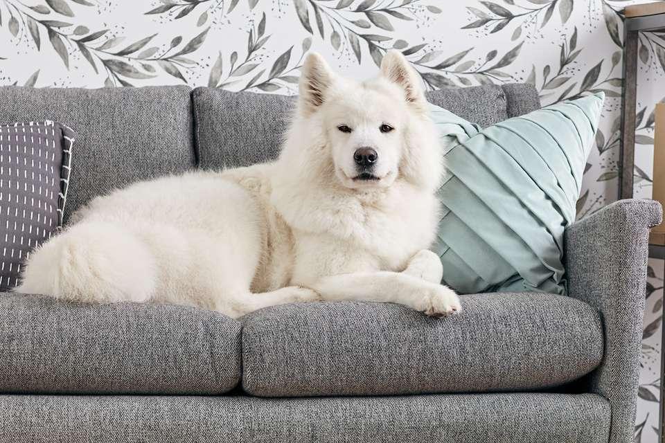 Beste Hondenbank
