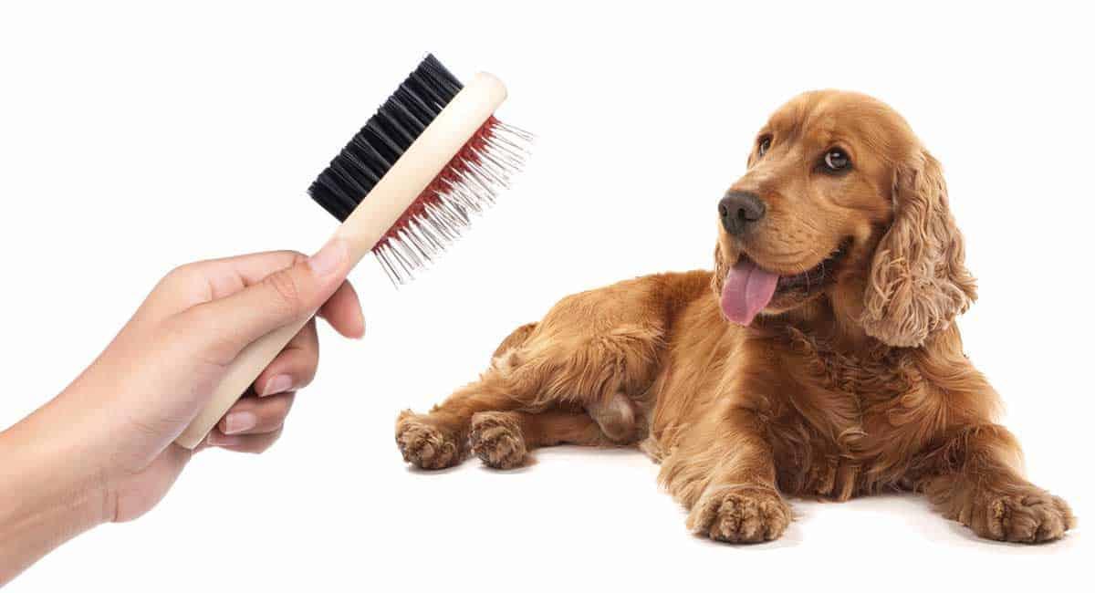 Beste Hondenborstel