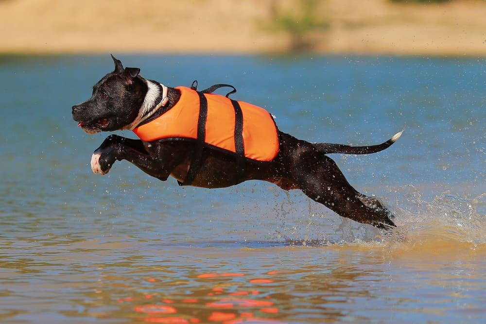 Beste zwemvest hond