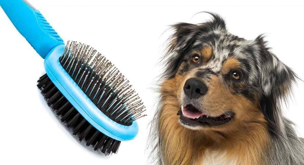 Hondenborstel