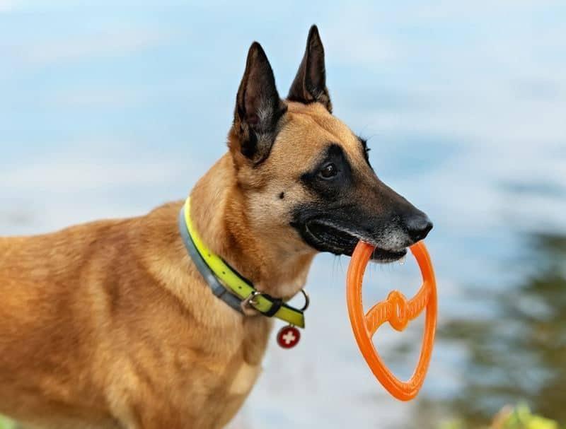 beste Lichtgevende halsband hond