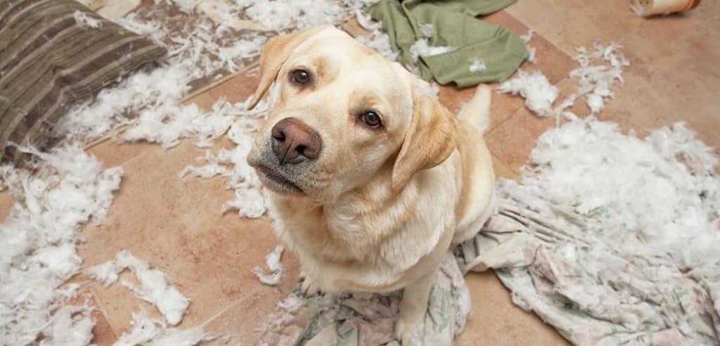 Stress bij je hond vermijden