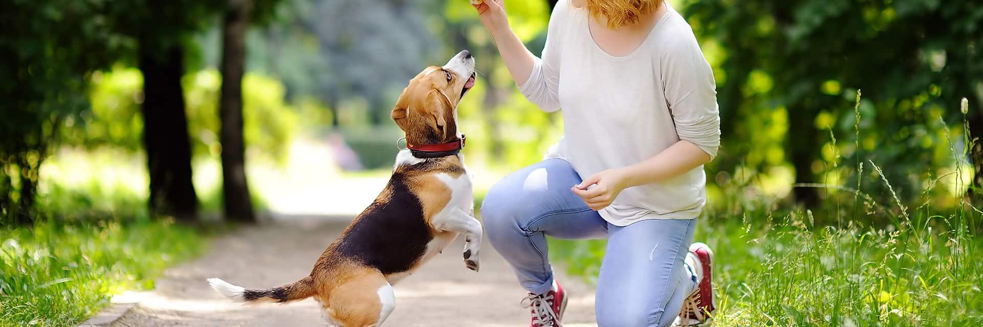 smolke hondenvoer
