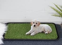 Beste Hondentoilet