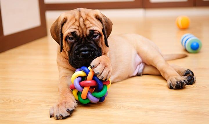 Beste Hondenspeeltjes