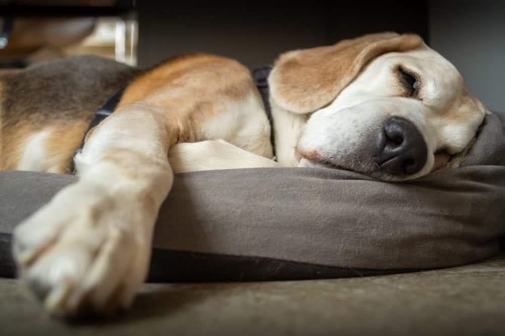 Hondenkussenhoes