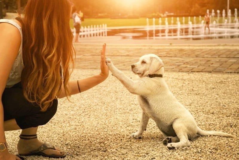 Zindelijkheidstraining voor honden